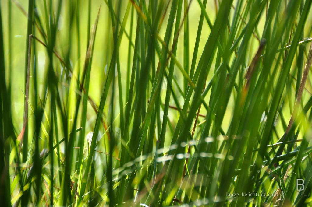 Nahaufnahme von wild wachsenden Gräsern. Die Gräser im Vordergrund und im Hintergrund sind dabei bewusst unscharf gemacht.