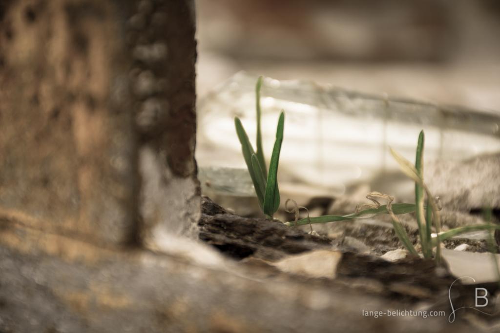 Die Natur erobert sich Lebensraum zurück. An einem verrosteten Rahmen mit Glasscherben und Mauerstüccken wachsen zwei kleine Grasbüschel.