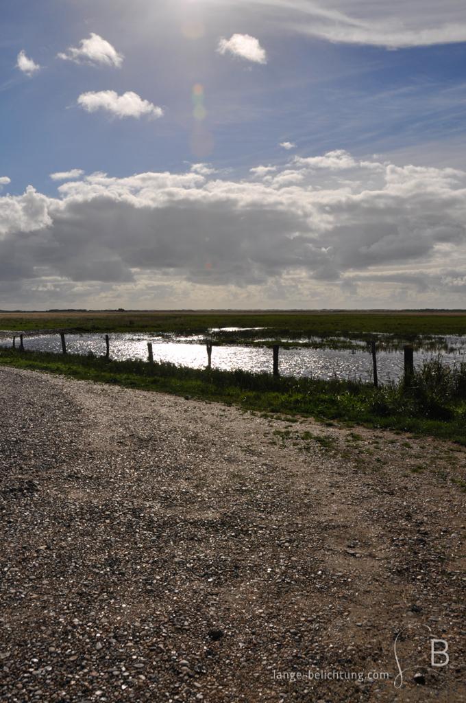 Bis zum Horizont erstreckt sich eine Weide. Im Vordergrund ein Schotterweg von dem das Foto aufgenommen wurde. Ein paar Wolken am Himmel geben den Blick auf die Sonne frei. Durch die Gegenlichtaufnahme wird eine Vignettierung und eine Lisenreflexion erzeugt.