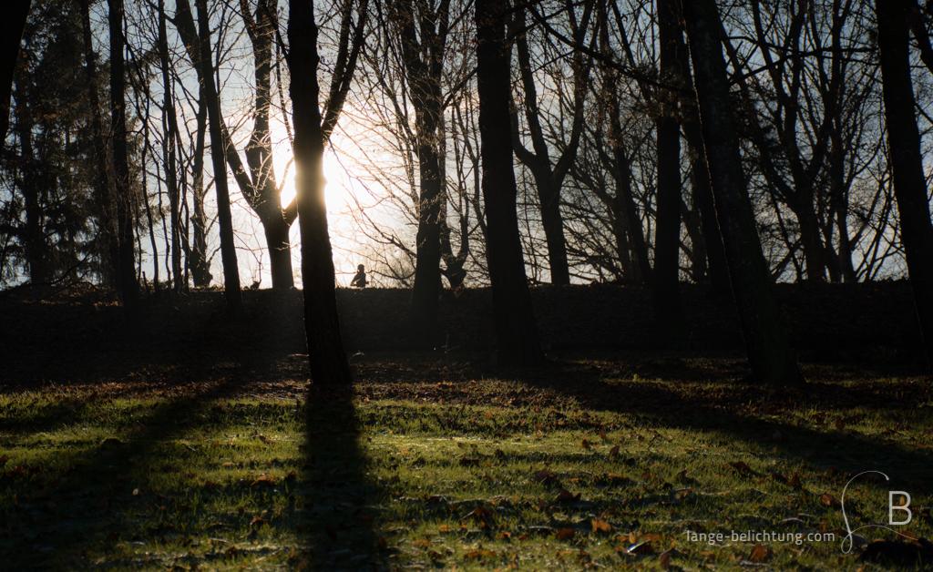 Durch von der Sonne angestrahlte Bäume läuft eine Joggerin. Die Sonne ist auf dem Bild direkt von einem Baum verdeckt. Das erzeugt ein interessantes Licht- und Schattenspiel. Im Vordergrund sieht man eine grüne Wiese.