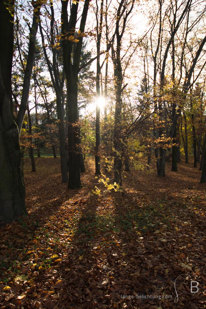 An einem sonnigen Herbsttag scheint die Sonne durch die fast schon kahlen Bäume. Lange Schatten fallen auf den mit braunem Laub bedeckten Boden.